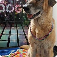 Adopt A Pet :: Ray(courtesy post)(AZ) - Spring City, TN