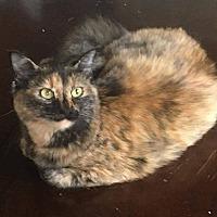 Adopt A Pet :: Mercedes - Mansfield, TX