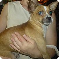 Adopt A Pet :: Barron - Glastonbury, CT