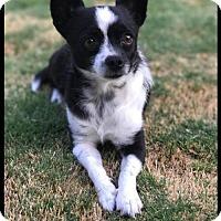 Adopt A Pet :: Josie - Arlington, WA