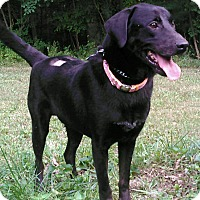 Adopt A Pet :: Luke - Waldorf, MD