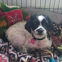 Adopt A Pet :: Rhianna - Mukwonago, WI