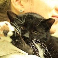 Adopt A Pet :: Sara (Guest) - Owings Mills, MD