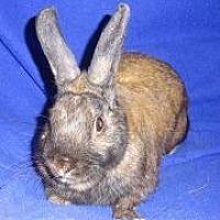 Adopt A Pet :: Merlin - Woburn, MA