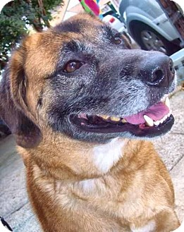German Shepherd Dog/Anatolian Shepherd Mix Dog for adoption in New Orleans, Louisiana - Milly