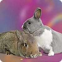 Adopt A Pet :: Cinndy & Forest - Marietta, GA