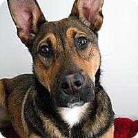 Adopt A Pet :: Rudy - Monteregie, QC