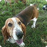Adopt A Pet :: Bessie - Linton, IN