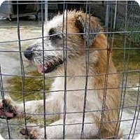 Adopt A Pet :: Anastasia - Alexandria, VA