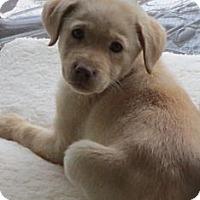 Adopt A Pet :: Berry Pup - Danbury, CT