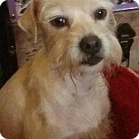 Adopt A Pet :: JD - Phoenix, AZ