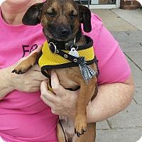 Adopt A Pet :: Hans - Marietta, GA