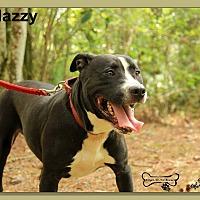 Adopt A Pet :: Mazzy - Sarasota, FL