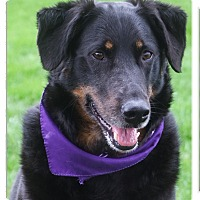Adopt A Pet :: Buddy ADOPTION PENDING - Sacramento, CA
