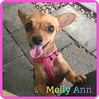 Adopt A Pet :: Molly Ann - Hollywood, FL