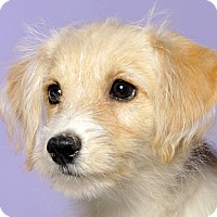Adopt A Pet :: Laurel - Adoption Pending - Crossville, TN