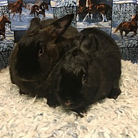 Other/Unknown Mix for adoption in Idaho Falls, Idaho - Digby and Duncan