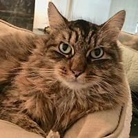 Adopt A Pet :: Mickey - Greenburgh, NY