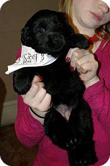 Labrador Retriever Mix Puppy for adoption in Huntsville, Alabama - Topaz