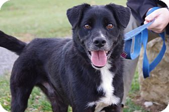 Border Collie Mix Dog for adoption in Elyria, Ohio - Sniffles