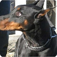 Adopt A Pet :: Ranger - Sun Valley, CA