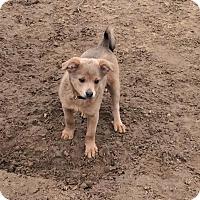 Adopt A Pet :: Preston - Woodward, OK