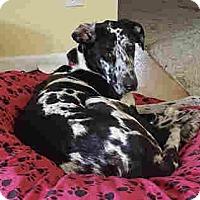 Adopt A Pet :: Jade - Indianapolis, IN