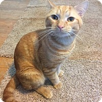 Adopt A Pet :: HARRISON - Burlington, NC