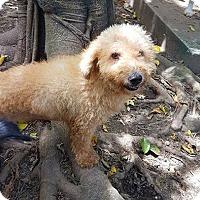 Adopt A Pet :: Betsy - Vancouver, BC