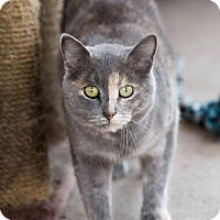 Adopt A Pet :: Sunday - Ashland, WI