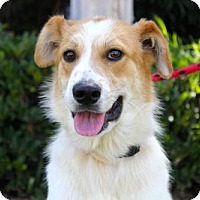 Adopt A Pet :: Krell - San Diego, CA