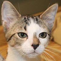 Adopt A Pet :: Charlie - Crossville, TN