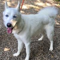 Adopt A Pet :: Ghost - West Olive, MI