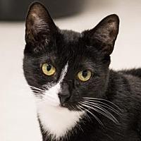 Adopt A Pet :: Ferne - Binghamton, NY