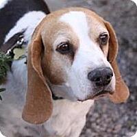 Adopt A Pet :: Dunkin - Phoenix, AZ