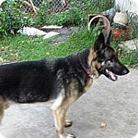 Adopt A Pet :: Nicki - Hamilton, MT