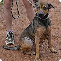 Adopt A Pet :: Kiki - Athens, GA