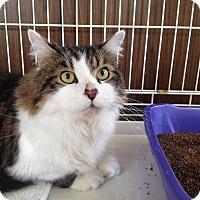 Adopt A Pet :: Gus - Bedford, MA