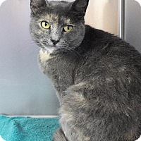 Adopt A Pet :: HARPER - Huntington Station, NY