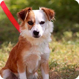 Terrier (Unknown Type, Small) Mix Dog for adoption in Buchanan Dam, Texas - Mufasa
