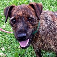 Adopt A Pet :: Ben - Lacon, IL