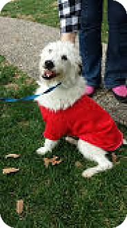 Terrier (Unknown Type, Medium) Mix Dog for adoption in LaGrange, Kentucky - Kimmie
