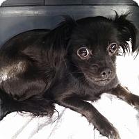 Adopt A Pet :: Louise - Gainesville, FL