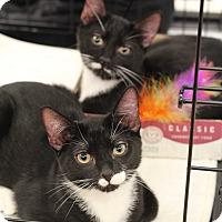 Adopt A Pet :: Robin & Jay - Richmond, VA
