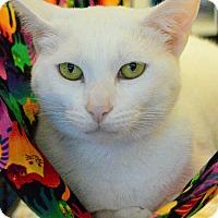 Adopt A Pet :: Candy - West Palm Beach, FL