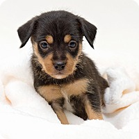 Adopt A Pet :: Conway - Westfield, NY
