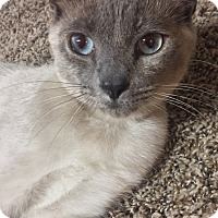 Adopt A Pet :: MIMSY - Cleveland, TN