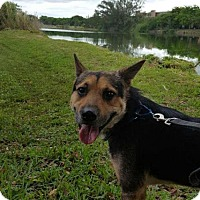 Adopt A Pet :: Randy - Maquoketa, IA