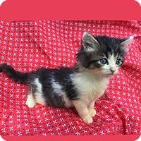 Adopt A Pet :: Baby Jacqueline - Columbus, OH