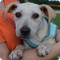 Adopt A Pet :: Betsy--ADOPTED - Springfield, MA